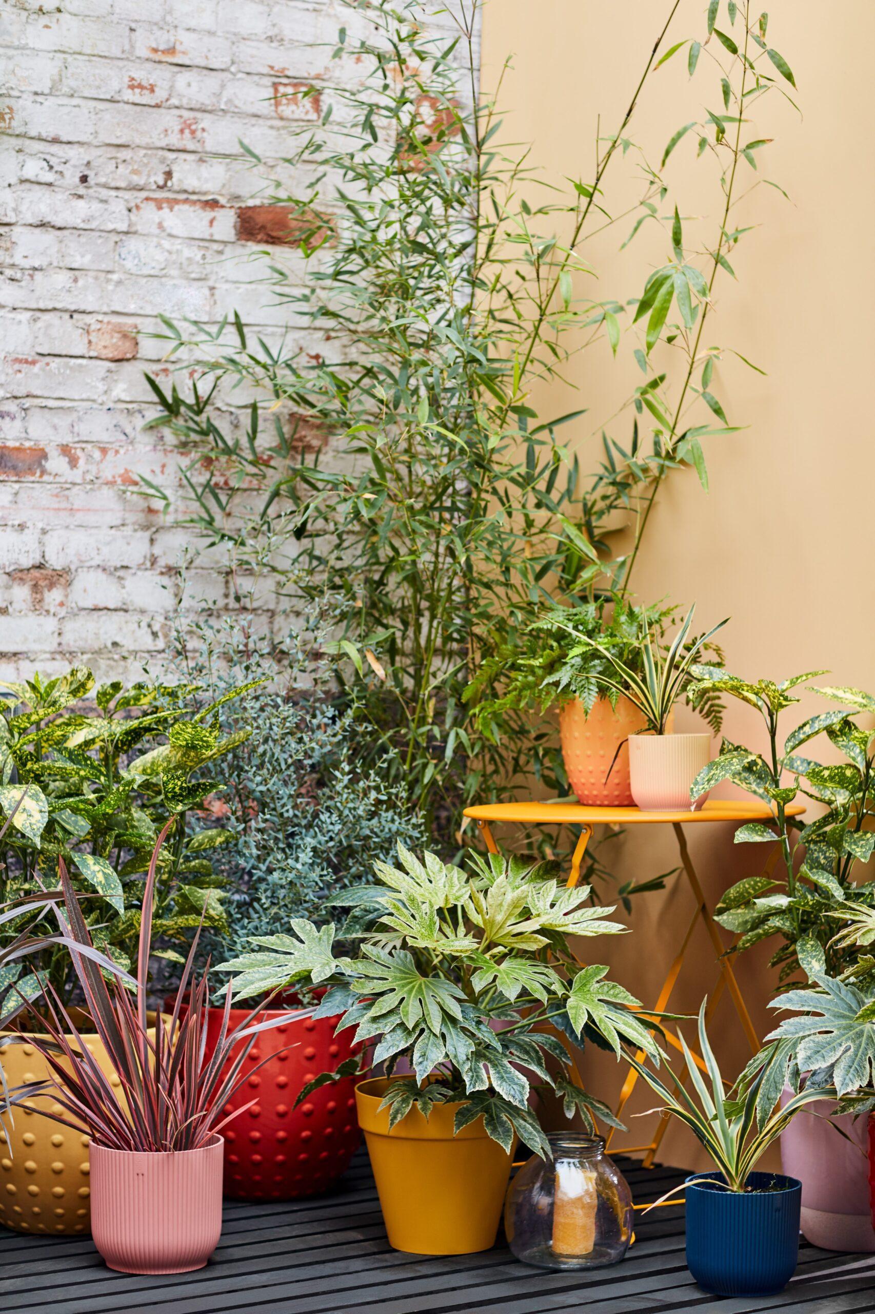 (C) Dobbies Garden Centres 2
