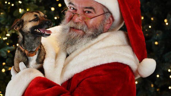 Dobbies Santa